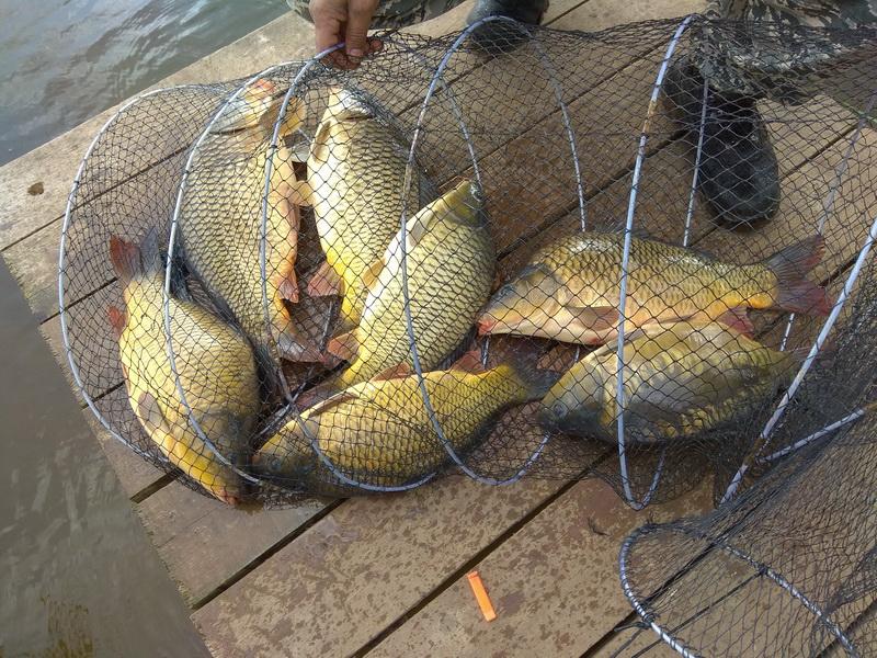 База отдыха «Рыбацкое подворье Владимировка» аффилирована со знаменитым Клинским рыбхозом, ловля проводится на его прудах